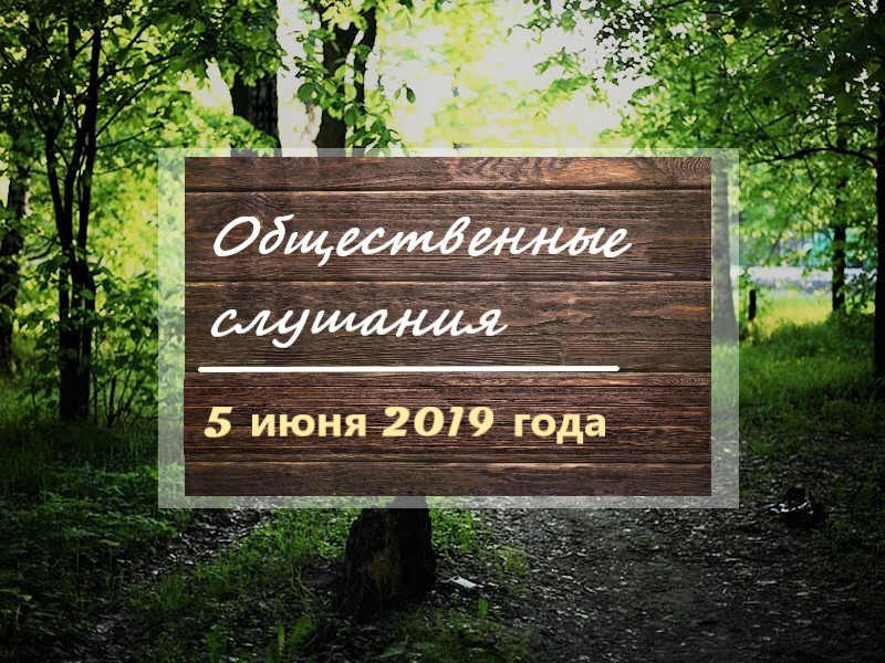 Общественная палата Амурской области проводит общественные слушания по вопросу лесопарковой зоны