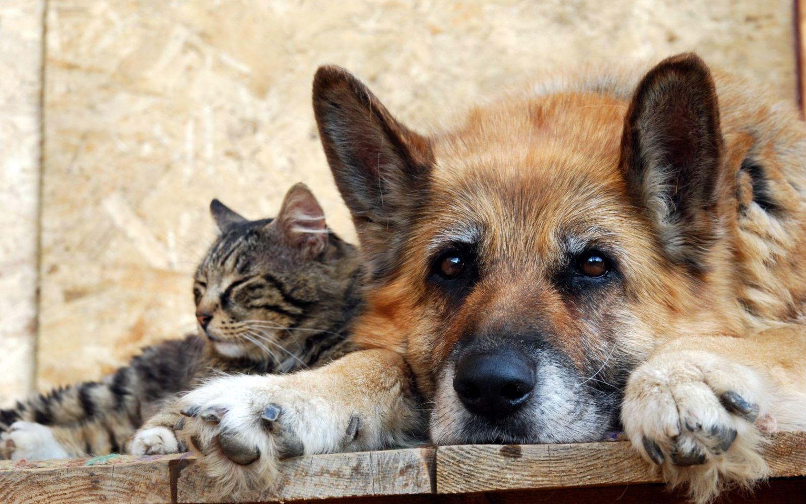 ОП АО приглашает на рабочую встречу по вопросу выработки предложений для решения проблем бездомных животных