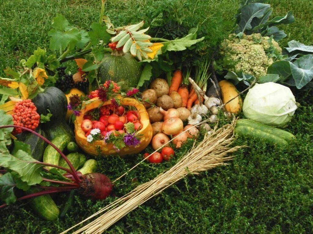 В ОПРФ предложили Правительству разработать госпрограмму поддержки дачников и огородников